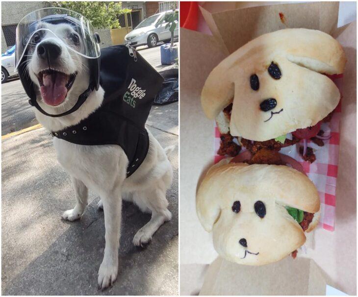 Perita repartidora de hamburguesas vegetarianas; Perrita reparte comida para ayudar a su albergue y no podemos con tanta ternura