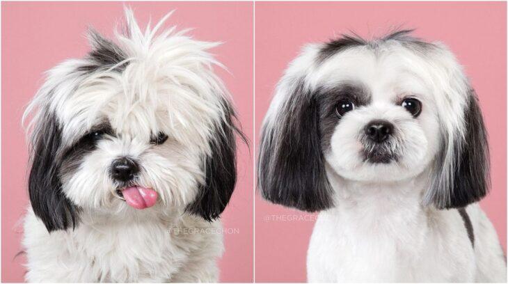 perro con pelaje blanco con negro ;Perritos antes y después de un corte de cabello