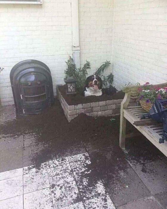 Perrito cavando un hoyo en el jardín