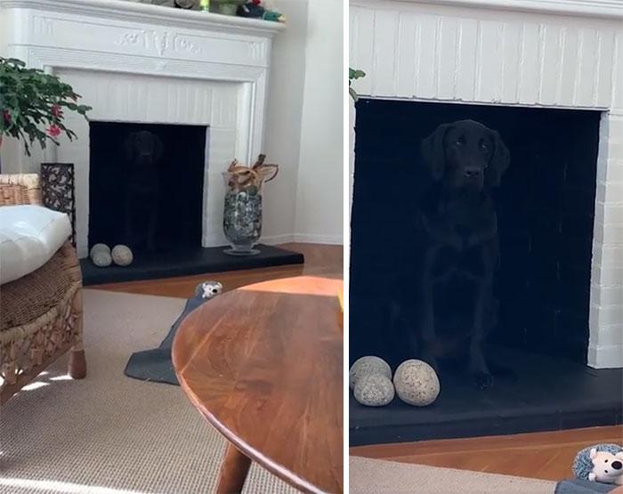 Perrito escondido en la chimenea