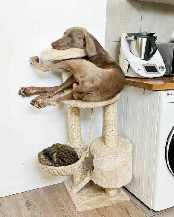 Perrito recostado en la torre de un gato
