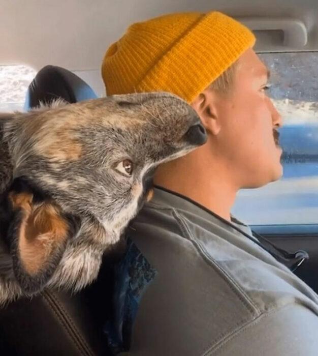 Perrito viendo manejar a su humano mientras está de cabeza