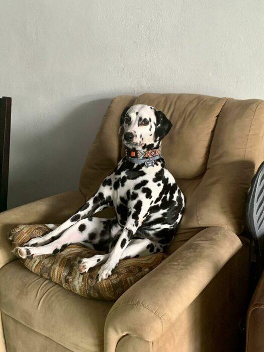 Perrito sentado en un sofá