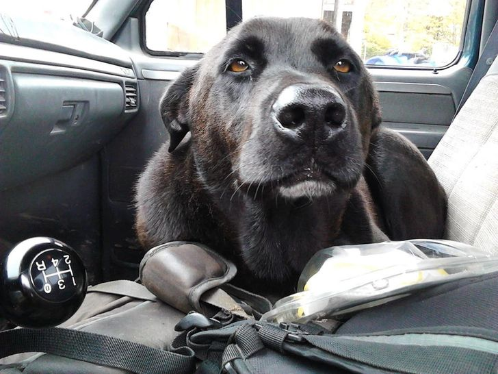 perrito dentro de un auto 14 Perros y gatos que han envejecido junto a sus dueños