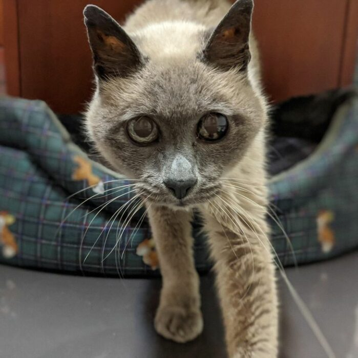 gato viejo; 14 Perros y gatos que han envejecido junto a sus dueños