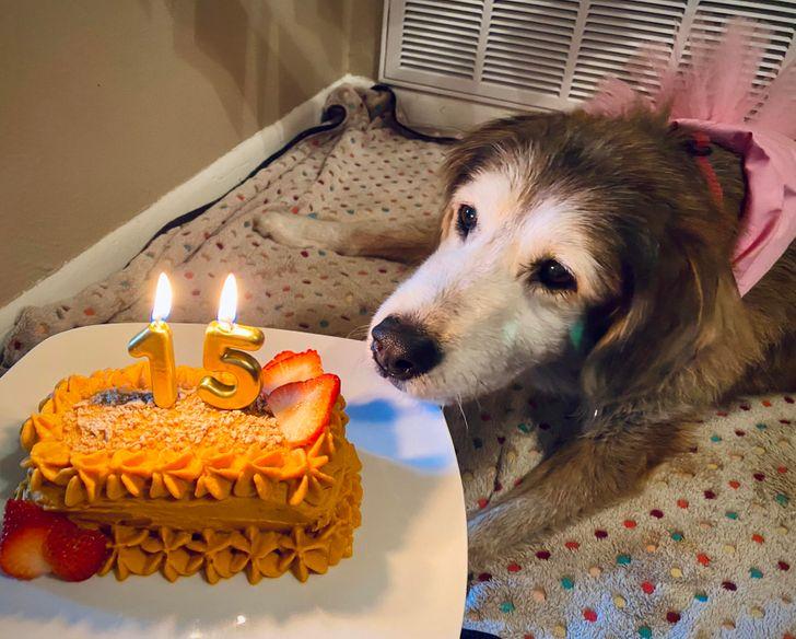 Perrito comiendo torta de pastel ;13 Corsés que te harán ver como una princesa moderna
