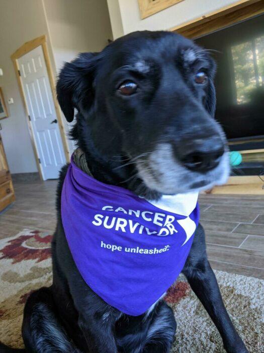 Perrito sobreviviente de cáncer usando una banda en su cuello