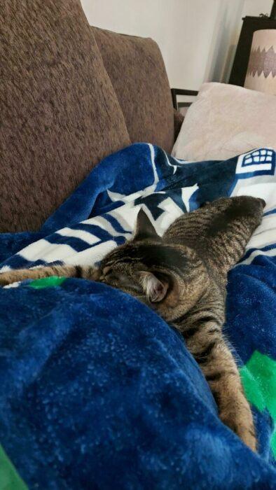 Gatito abrazando a su humana embarazada