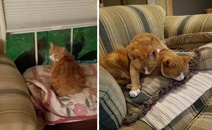 Gato abrazando a su hermano mientras están en un sofá