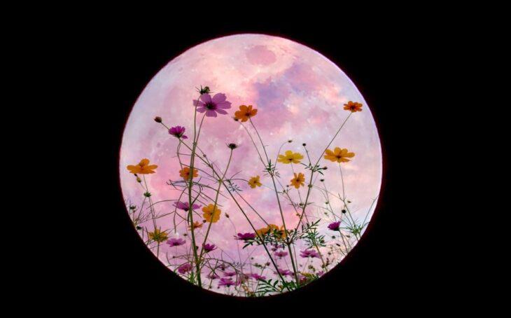 Superluna de las flores; Prepárate para ver el primer eclipse total de Luna del año