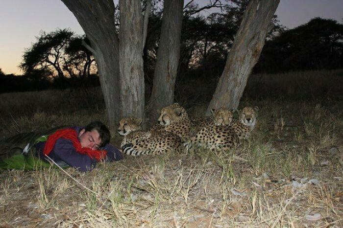 chico dormido junto a unos guepardos ;15 Personas que mantuvieron la calma en momentos críticos