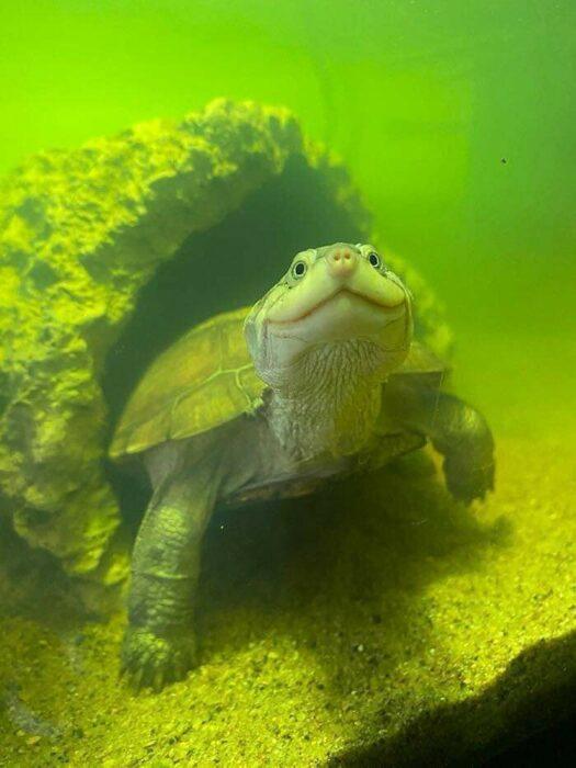 Tortuga marina ;18 Animalitos que te alegrarán la vida con su existencia