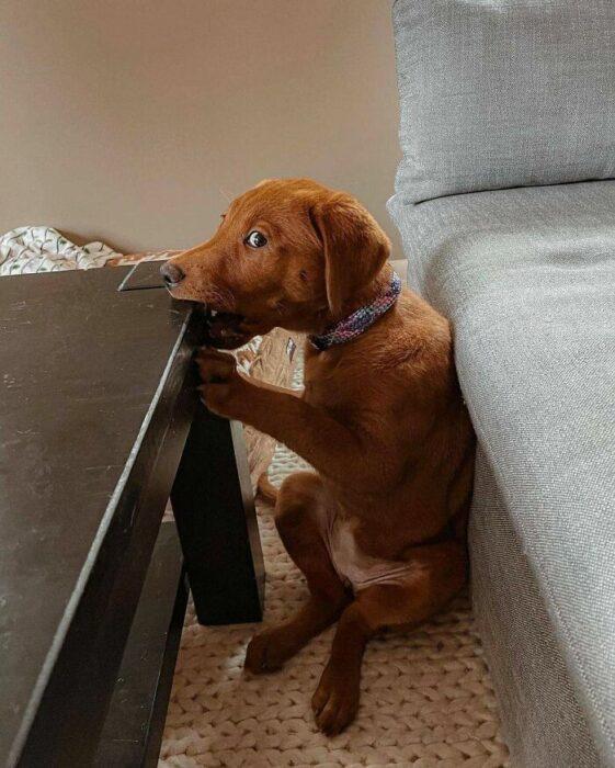 perro asustado ;18 Animalitos que te alegrarán la vida con su existencia