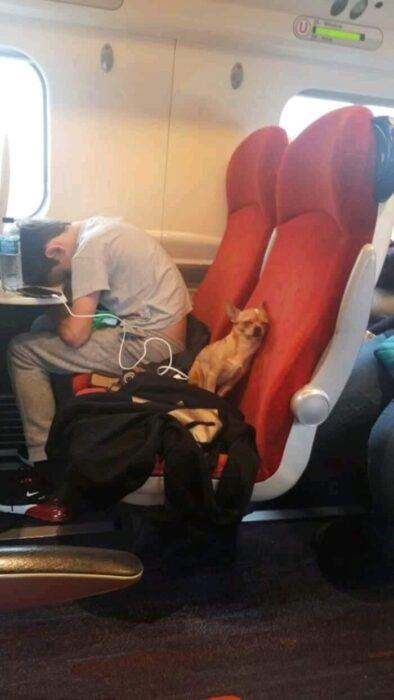 perro dormido en un vuelo en avión ;18 Animalitos que te alegrarán la vida con su existencia