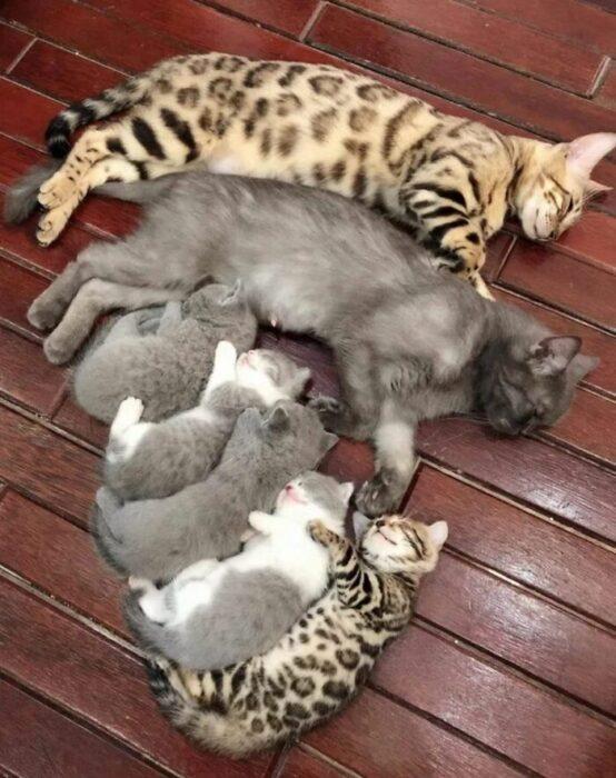 familia de gatos ;18 Animalitos que te alegrarán la vida con su existencia