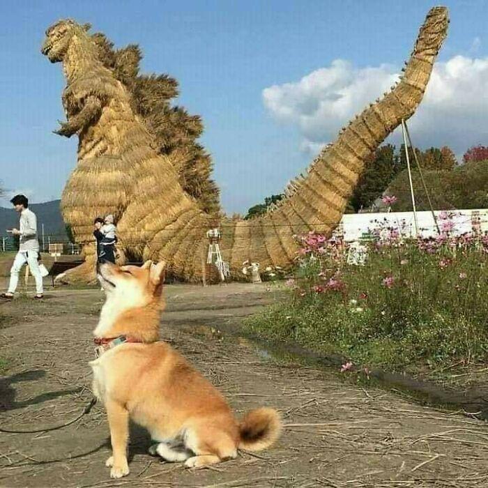perro junto a una estatua ;18 Animalitos que te alegrarán la vida con su existencia