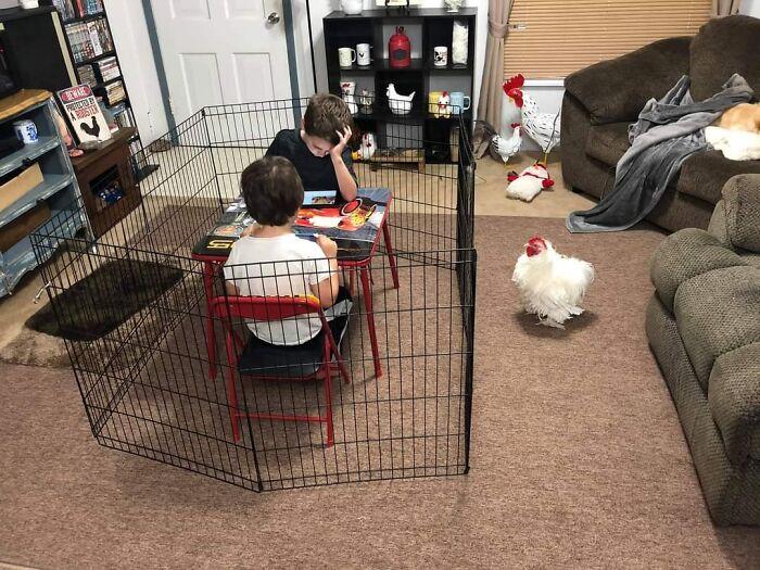 niños dentro de un gallinero ;18 Animalitos que te alegrarán la vida con su existencia