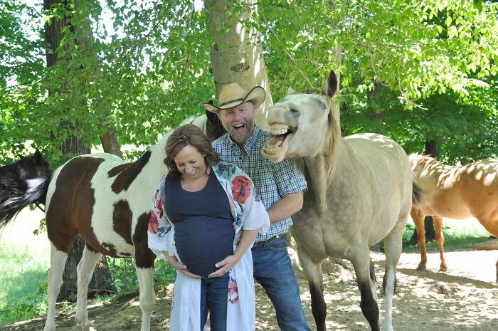 Caballo y pareja riendo en sesión de fotos ;Caballito interrumpe sesión de maternidad y su sonrisa hace reír a todo internet