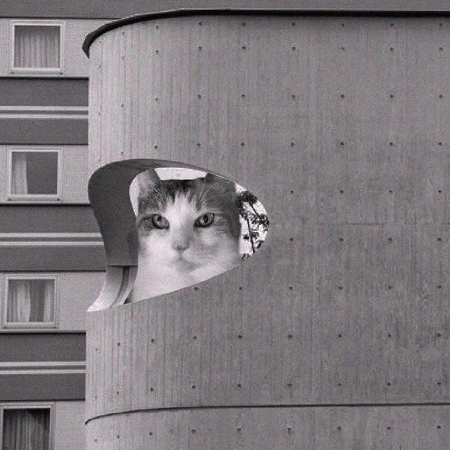 Gatito dentro de un edificio ;Cuenta de Instagram combina arquitectura con gatitos y el resultado te hará ronronear