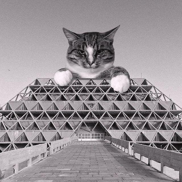 Gato tras pirámides ;Cuenta de Instagram combina arquitectura con gatitos y el resultado te hará ronronear