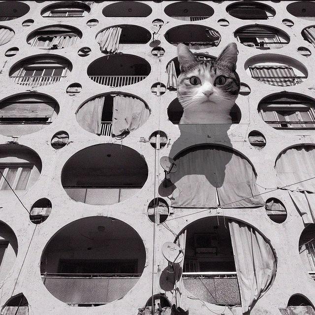 gatos dentro de una estructura con agujeros ;Cuenta de Instagram combina arquitectura con gatitos y el resultado te hará ronronear