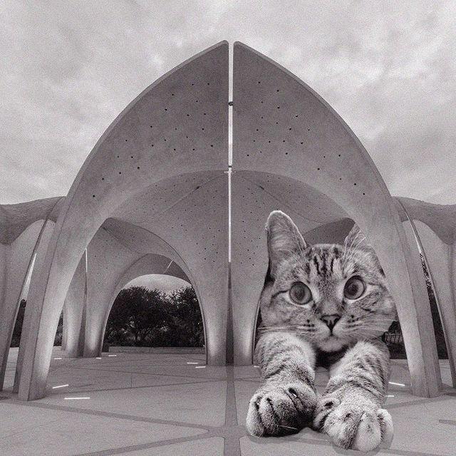 Gato dentro de una estructura ;Cuenta de Instagram combina arquitectura con gatitos y el resultado te hará ronronear