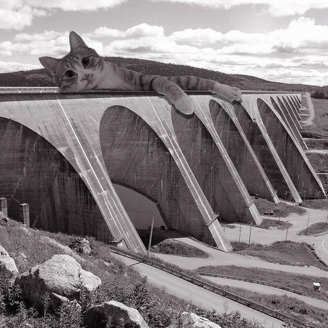 Gatito recostado en un puente ;Cuenta de Instagram combina arquitectura con gatitos y el resultado te hará ronronear