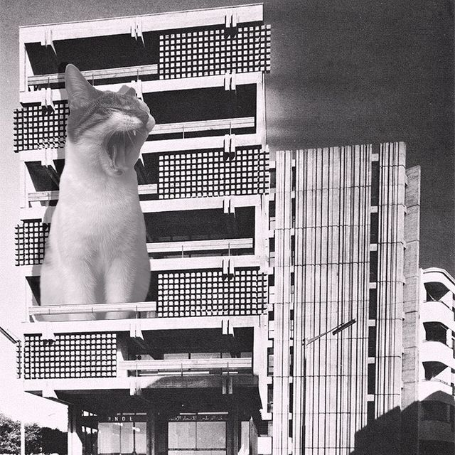 Gatito bostezando ;Cuenta de Instagram combina arquitectura con gatitos y el resultado te hará ronronear