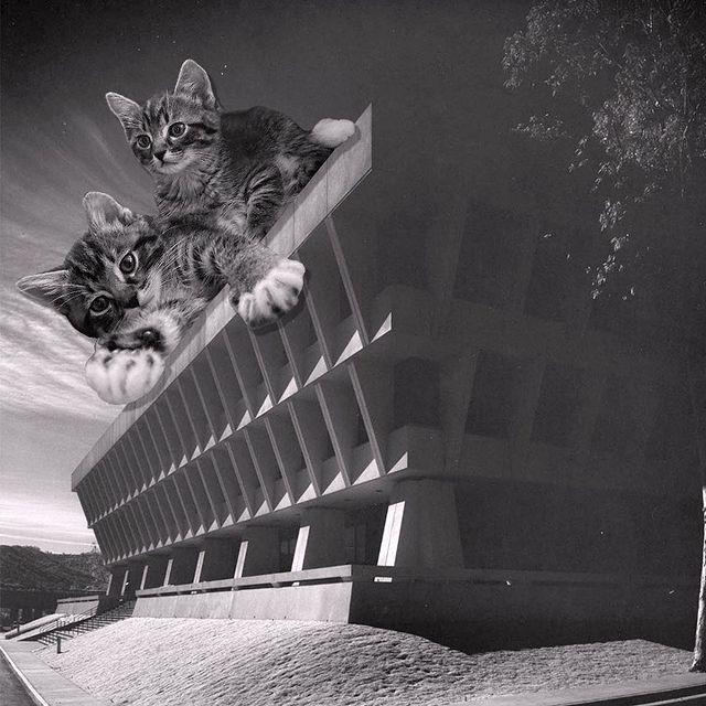 Gatitos sobre el techo ;Cuenta de Instagram combina arquitectura con gatitos y el resultado te hará ronronear