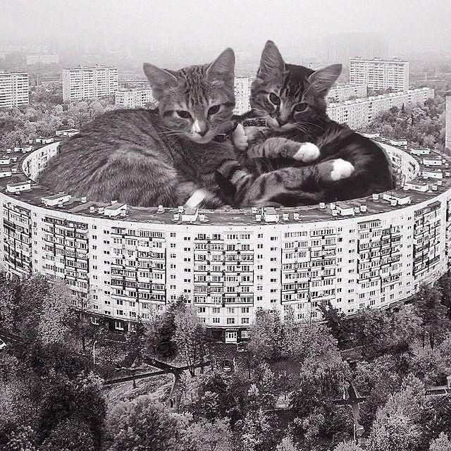 Gatitos recostados en un salón de juegos ;Cuenta de Instagram combina arquitectura con gatitos y el resultado te hará ronronear