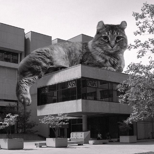Gato sobre un edificio ;Cuenta de Instagram combina arquitectura con gatitos y el resultado te hará ronronear
