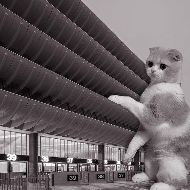 Gato parado sobre un edificio ;Cuenta de Instagram combina arquitectura con gatitos y el resultado te hará ronronear