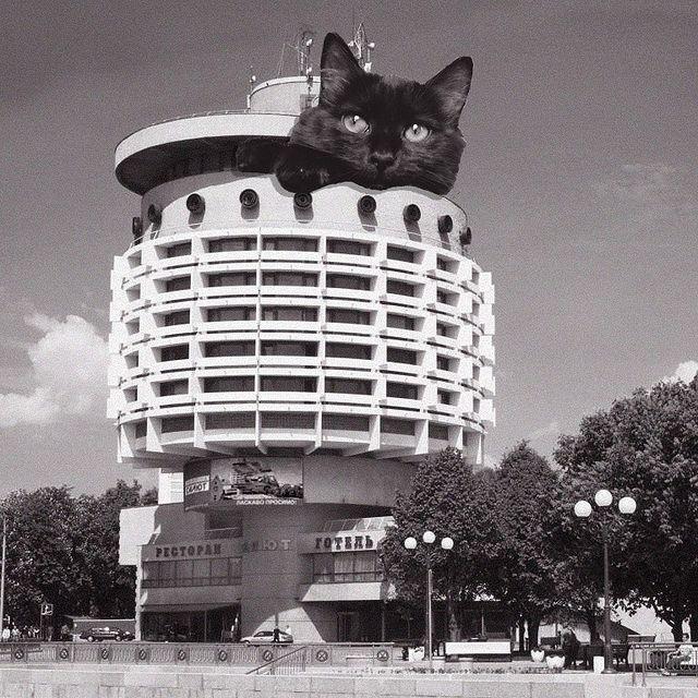 Gato saliendo del techo de un edificio ;Cuenta de Instagram combina arquitectura con gatitos y el resultado te hará ronronear