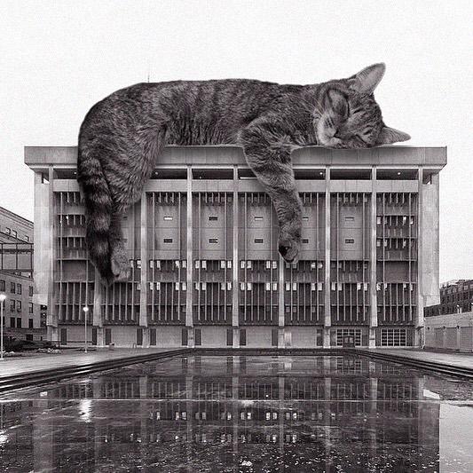 Gato recostado en el techo ;Cuenta de Instagram combina arquitectura con gatitos y el resultado te hará ronronear