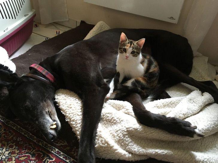 Gatita rescatada acurrucada con un perro