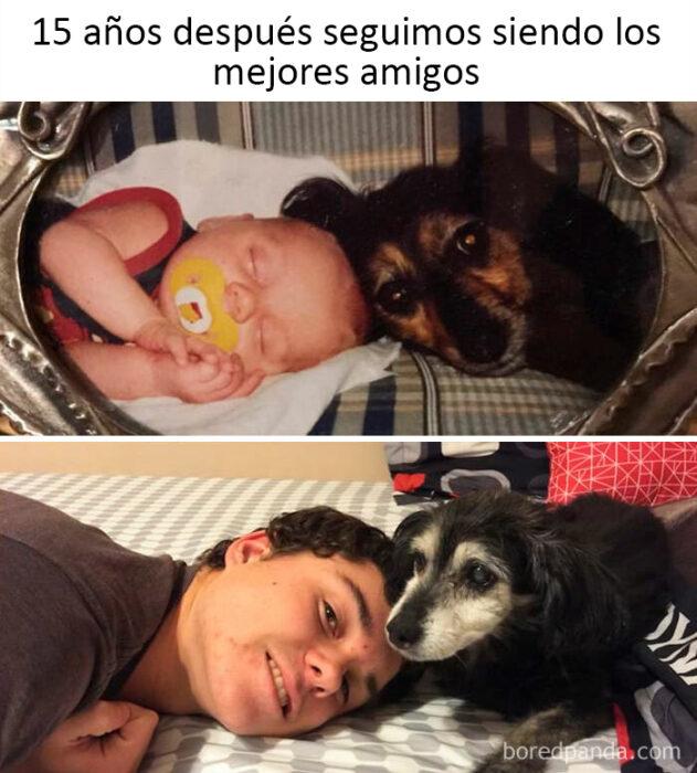 memes de perritos que reflejan lo que es tener un amigo de 4 patas