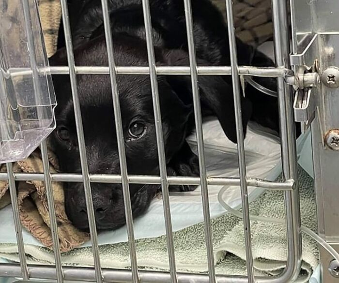 Perrito durmiendo en una jaula con agua y comida