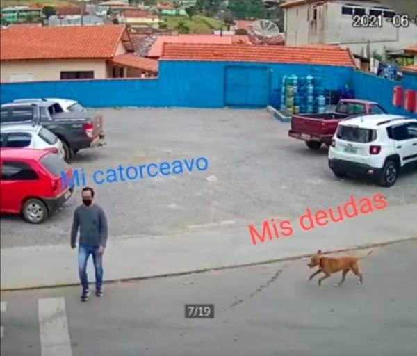 meme de perrito ;Perrito atropella a hombre que cruzaba la calle y se desata la memiza en redes