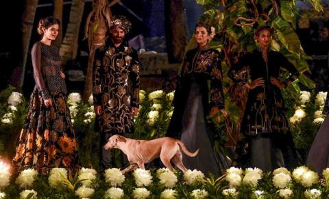 Perrito caminando en un desfile de modas