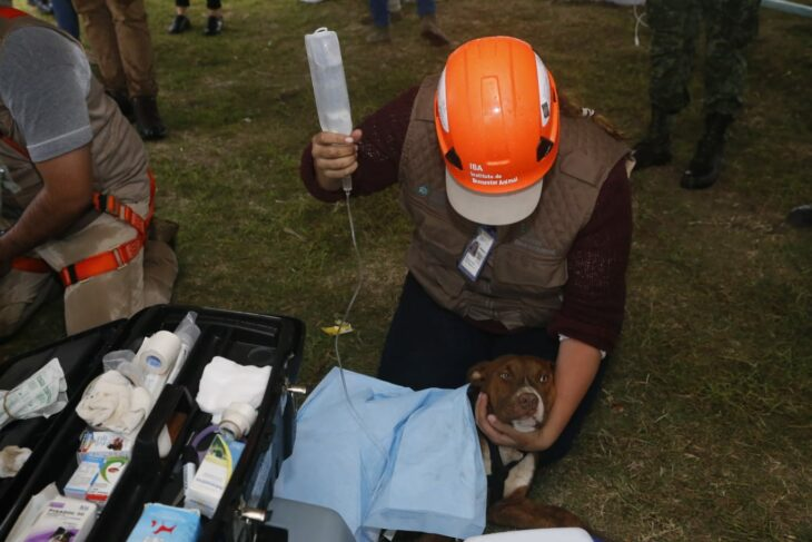 Activistas suministrando suero a perritos