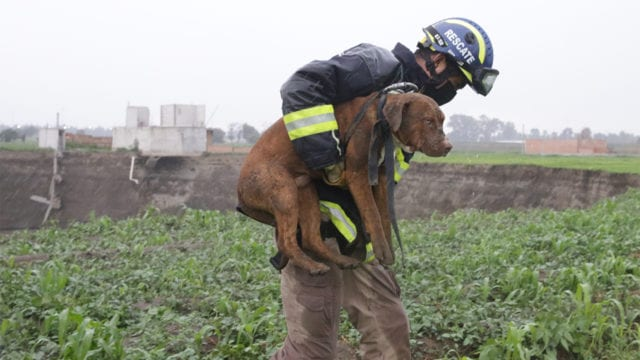 Bombero sujetando a un perrito en brazos