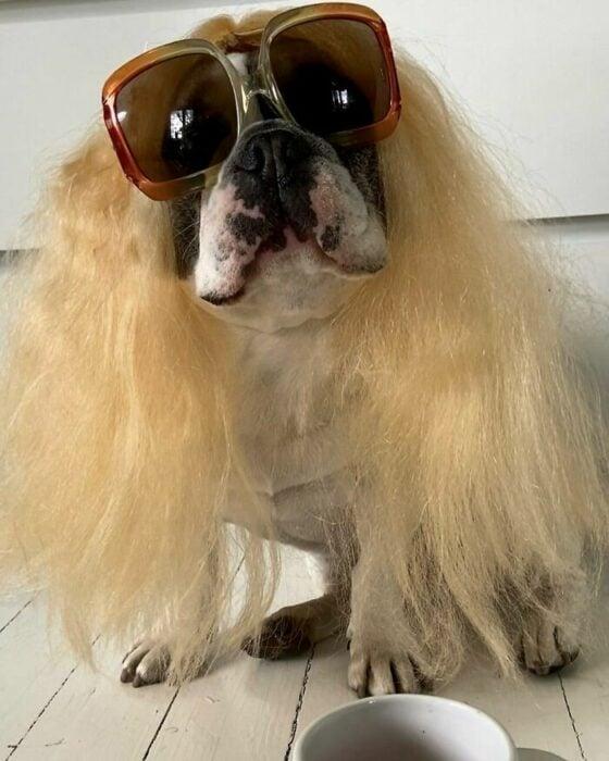 Perro con gafas y lentes ;Personas publican fotos de perritos con pelucas y el resultado alegra a internet