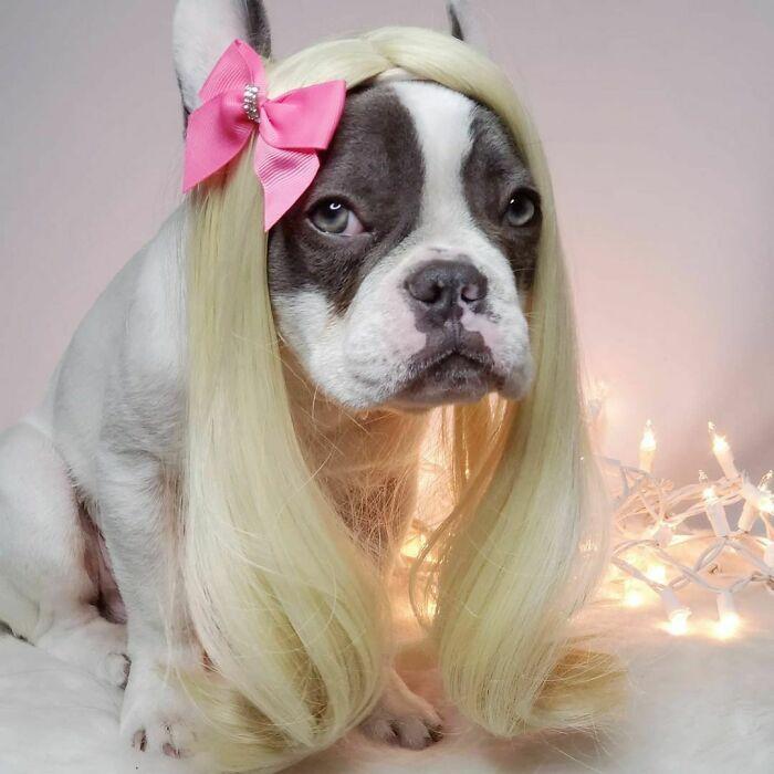 Perro con peluca larga y rubia ;Personas publican fotos de perritos con pelucas y el resultado alegra a internet