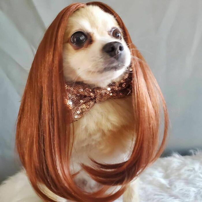 Perro con cabello rojizo y largo ;Personas publican fotos de perritos con pelucas y el resultado alegra a internet