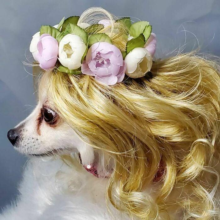 Perro con peluca rubia dorado ;Personas publican fotos de perritos con pelucas y el resultado alegra a internet
