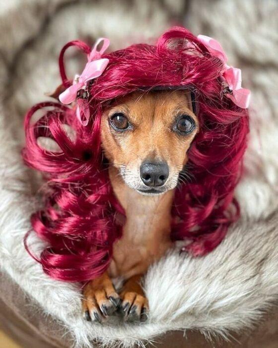 Perro con peluca rosa ;Personas publican fotos de perritos con pelucas y el resultado alegra a internet