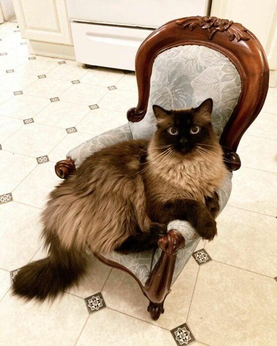 Gatito de color café sentado en una pequeña silla