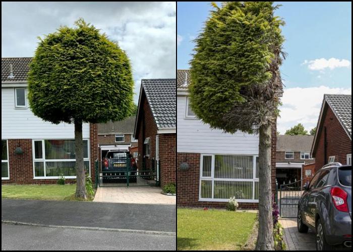 árbol cortado a la mitad en inglaterra