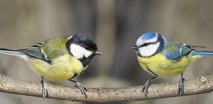 Pájaros piando ;15 Vecinos tan molestos que no te gustaría vivir en su vecindario