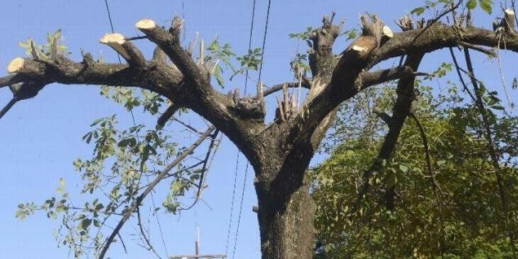 Árbol recién cortado ;15 Vecinos tan molestos que no te gustaría vivir en su vecindario